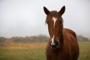 Portrait en couleur d'un cheval dans la brume hivernale