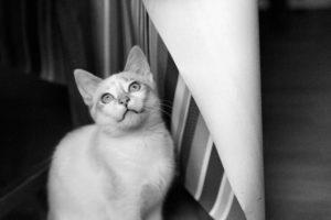 Portrait d'un chat en train de prendre une pose